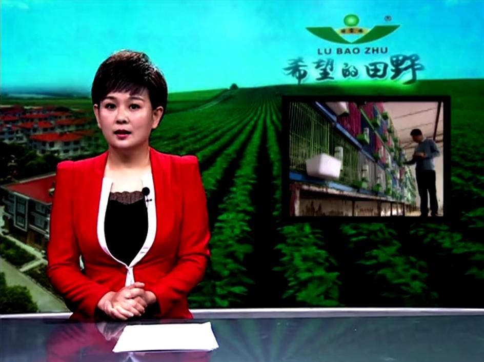 菏泽电视台希望的田野播出《下蛋能手桂花鸡》